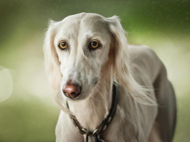 Welthundetag: Die schönsten Hundebilder aus der Lesergalerie