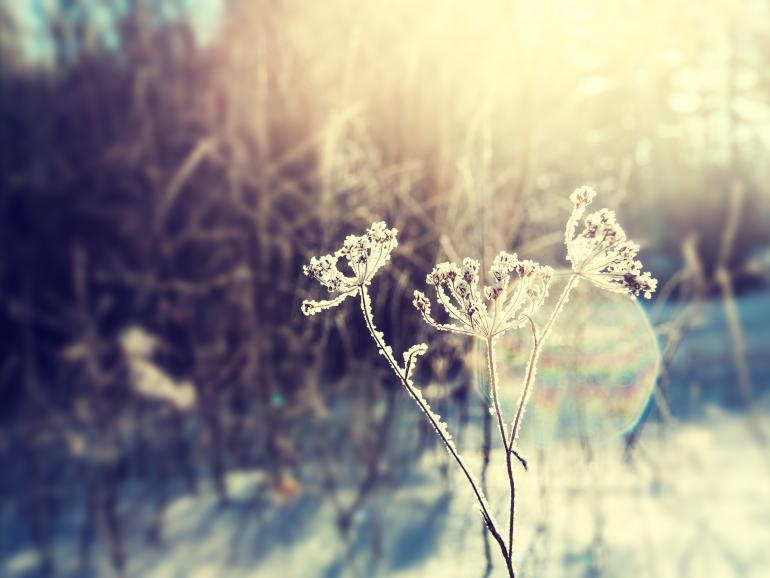 22 Tipps für tolle Winterfotos | DigitalPHOTO