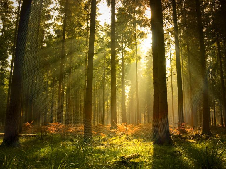 Lichtstrahlen im Wald: Foto-Basics