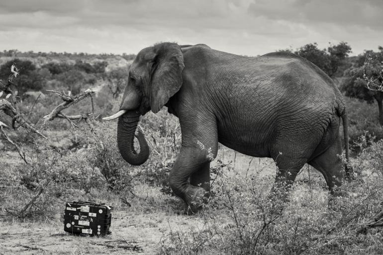#alphaddicted - der Koffer reist nach Indonesien und Südafrika