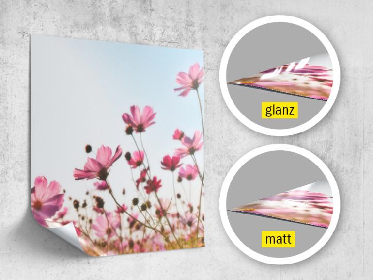 Bei Postern können Sie bei www.bilder.de zwischen den Varianten  matt und glänzend wählen. Die Poster werden auf Premium-Papier mit 250g/m² Papierstärke gedruckt. Bestellbar sind Größen von 20 x 20 cm bis 300 x 100 cm.