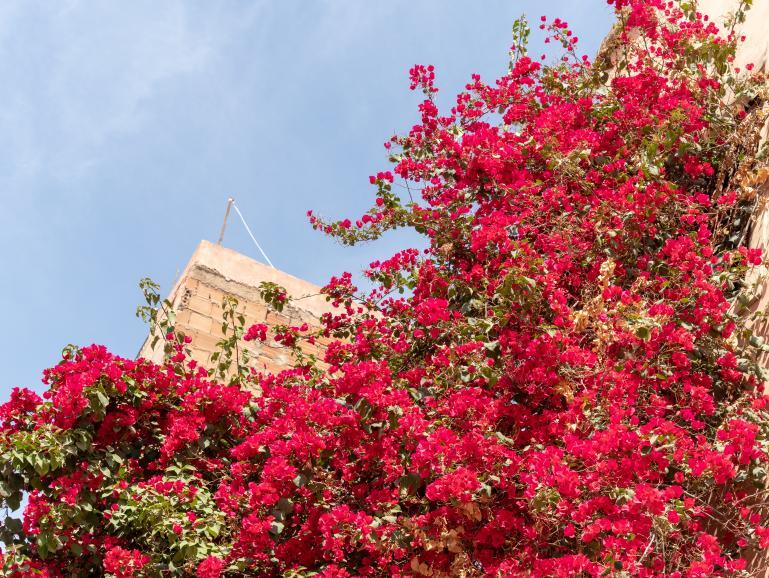 Reisefotos mit der Canon EOS M50: Marrakesch – 1001 Bild