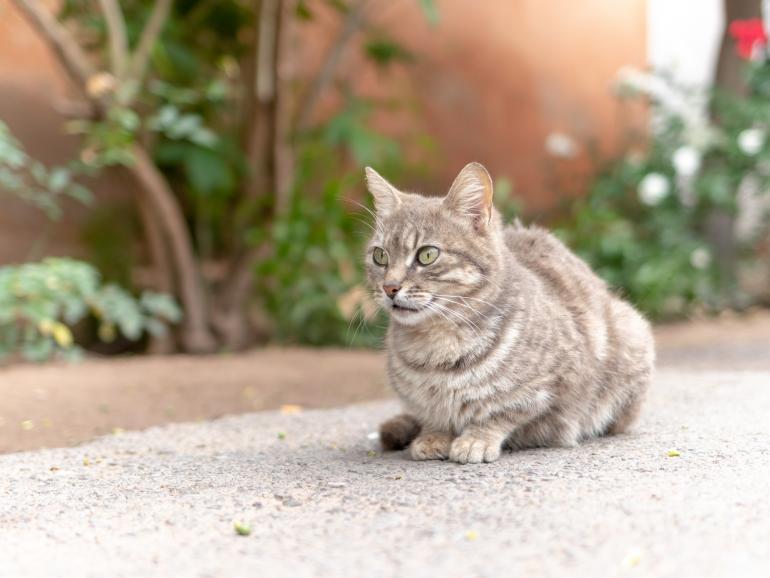 Straßenkatzen gehören zum Straßenbild der marokkanischen Stadt im Landesinneren. Bei diesem Bild war die Kamera in Bodennähe.