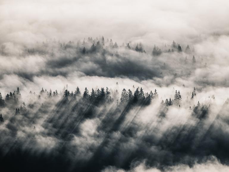 Foto-Basics: Herbst im Nebel