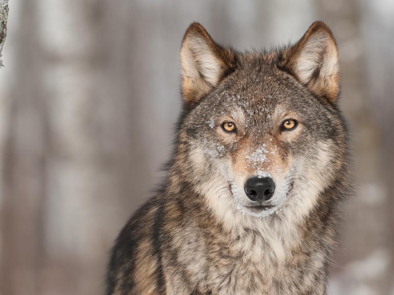 Foto-Basics: Wildlife-Tipps
