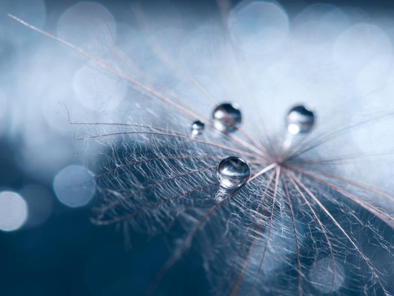 Foto-Basics: Autofokus leicht gemacht