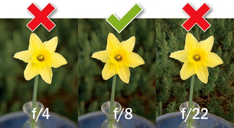 Die besten Fototipps für Ihre Kamera - Fokus und ISO-Wert