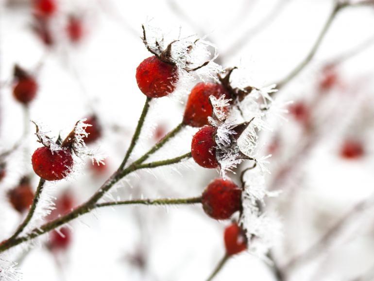 Foto-Basics: Naturfotos und Wetter