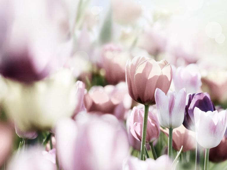 Foto-Basics: 5 Motive für den Frühling