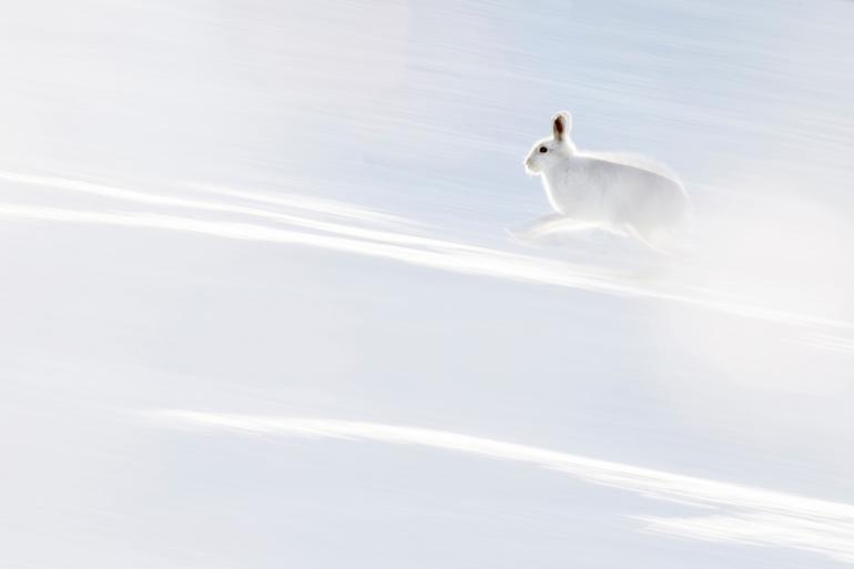 Naturfotografie: GDT Naturfotograf des Jahres 2019, die Gewinner stehen fest!