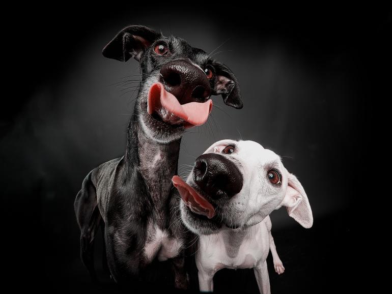 Tierfotografie: 11 süße und witzige Aufnahmen aus der Lesergalerie