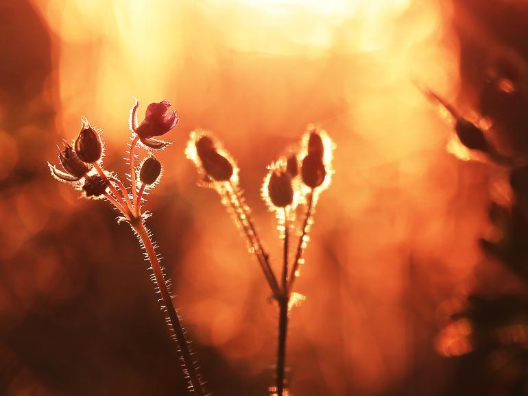 Pflanzen bei Dämmerung: Foto-Basics | DigitalPHOTO