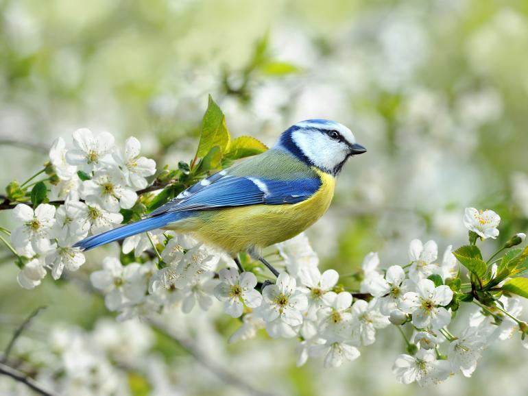 Foto-Basics: Vogelfotos mit Blickkontakt