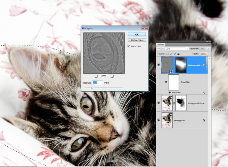 Photoshop: 7 Kniffe für Tierfotos