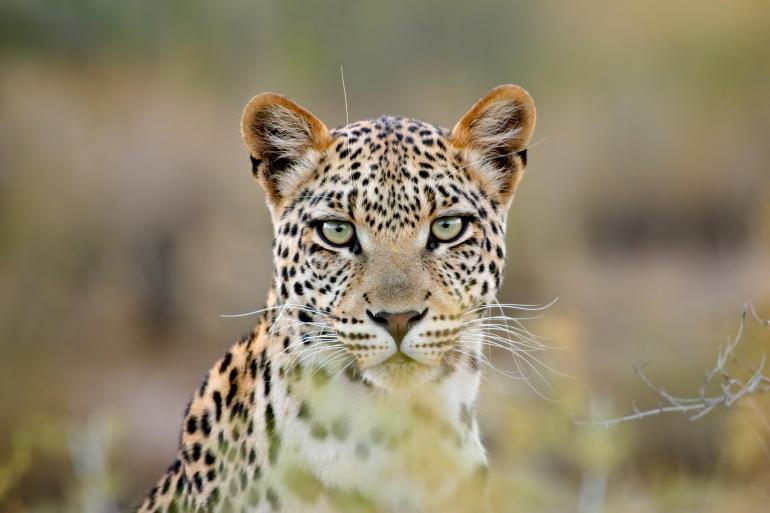 Fotograf des Jahres 2018 | Wildlife