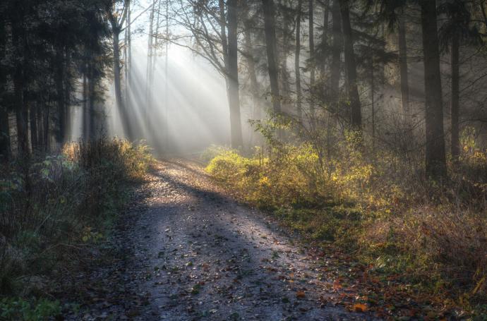 beleuchteter Weg