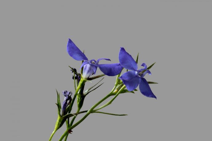 Kleine Wiesenblume