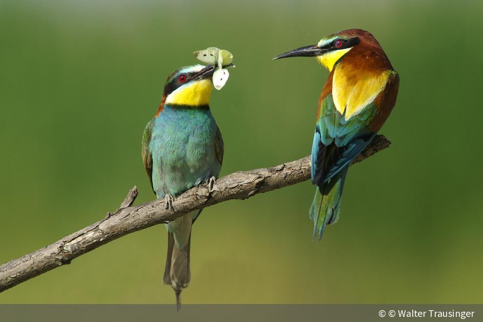 fotograf des jahres die 10 besten fotos zum thema wildlife digitalphoto. Black Bedroom Furniture Sets. Home Design Ideas