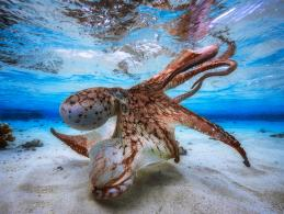 International Underwater Photography of the Year