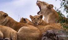 Gesucht: Safariblogger! Die Sigma Fotoreise 2015 geht nach Kenia