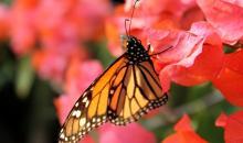 Frühlingsanfang: Diese 10 Leser-Fotos machen Lust auf den Jahreszeitenwechsel
