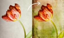Ebenenmasken: So verleihen Sie Fotos neue Hintergründe