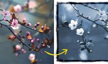 Analoge Bildeffekte in Photoshop simulieren: Cyanotypie
