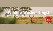 Event-Tipp: Wildlife-Woche im September