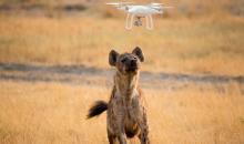 Drohnenfotos aus Afrika