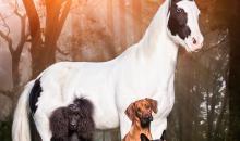 """Die schönsten Fotos aus dem Leserwettbewerb """"Haustiere"""""""