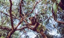 Beeindruckende Reisefotos: #alphaddicted in Australien