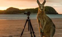 Top Wildlife-Fotografen gesucht!
