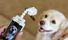 Blick auf Kickstarter: FlexyPaw - Hingucker für Hunde