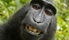 Selfiestreit: Prozess um Affenfoto beendet