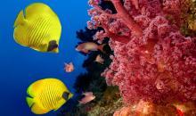 Foto-Basics: Fotos unter Wasser