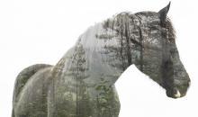 Foto-Basics: künstlerische Doppelbelichtung