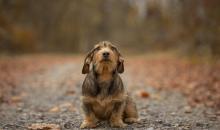 Tierfotografie: Schritt für Schritt zum Profi-Hundeporträt