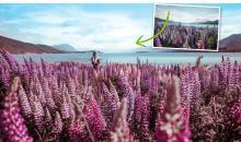 Color Grading in Camera Raw - Photoshop einfach erklärt