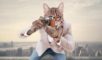So kombinieren Sie Mensch und Tier in Photoshop