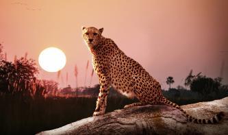 Leserwettbewerb: Die Top 10 aus der Kategorie Wildlife