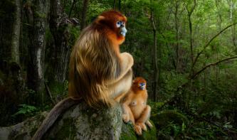 Die besten Wildlife-Fotografien des Jahres 2018