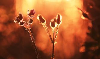 Foto-Basics: Pflanzen bei Dämmerung